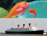 Click here for the Fish and Ships